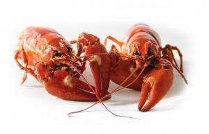 crayfish-423251_640