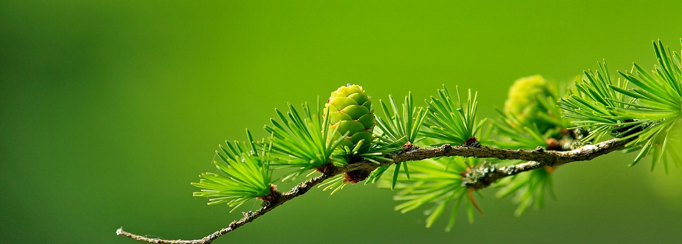 biodiversidad_vege2