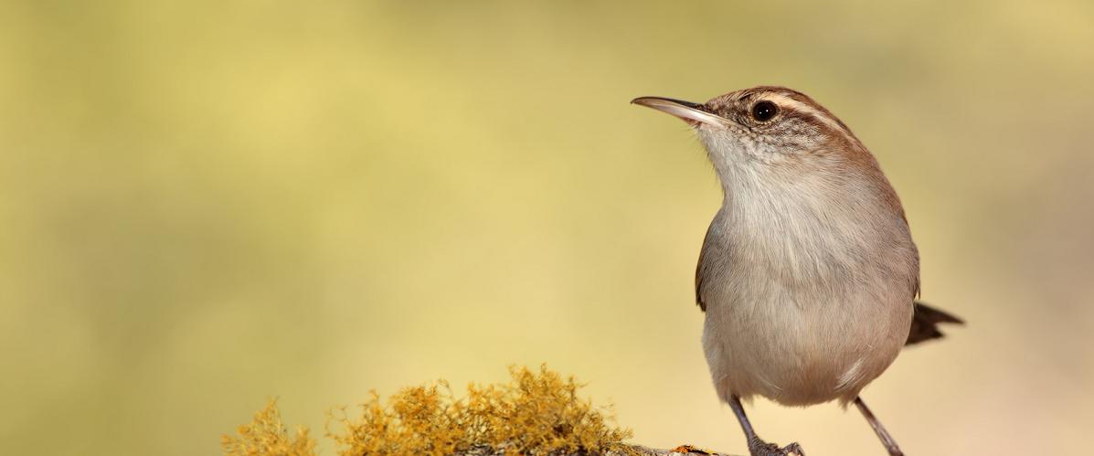 curso-de-ornitologia