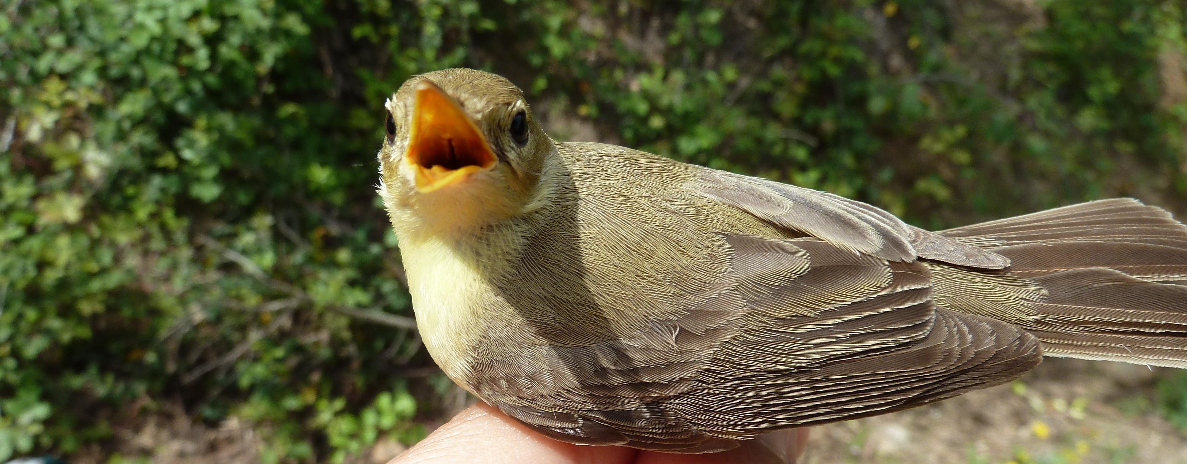 ornitologia malaga
