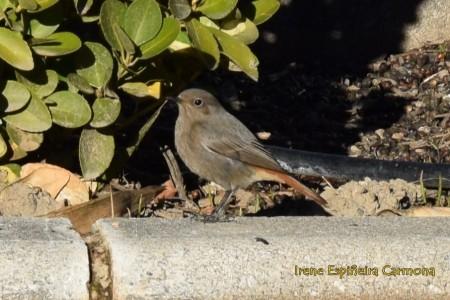 curso_ornitologia_sfera_1