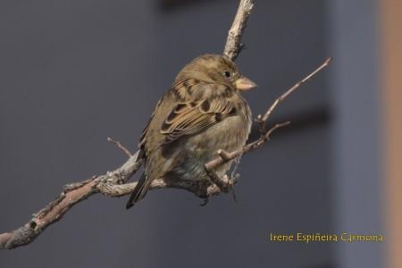 curso_ornitologia_sfera_2
