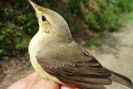 aves_malaga
