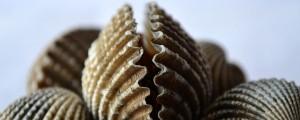 shells-166894_640