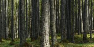 madera 3