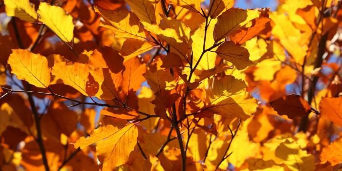 hoja_otoño_sfe
